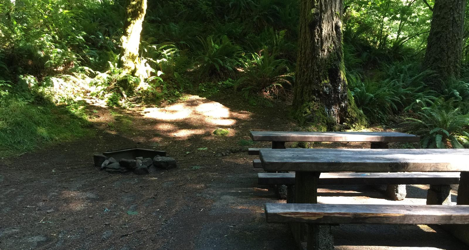 Picture of picnic table, fire ring and BBQ grill.