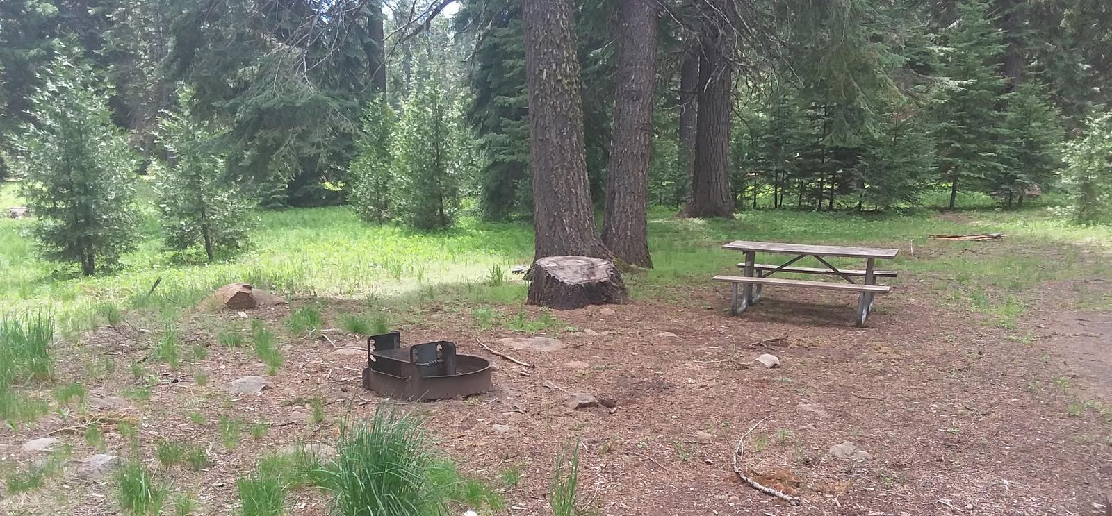 Campsite B26- Hyatt LakeCampsite 26, B Loop Hyatt Lake