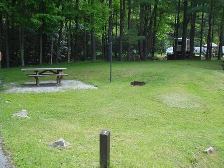 Raccoon Branch CampgroundSite near wooded area