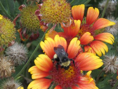 WASHINGTON IRVING SOUTHButterfly garden at Washington Irving South.