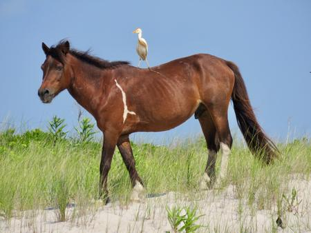 Preview photo of Assateague Island National Seashore Campground