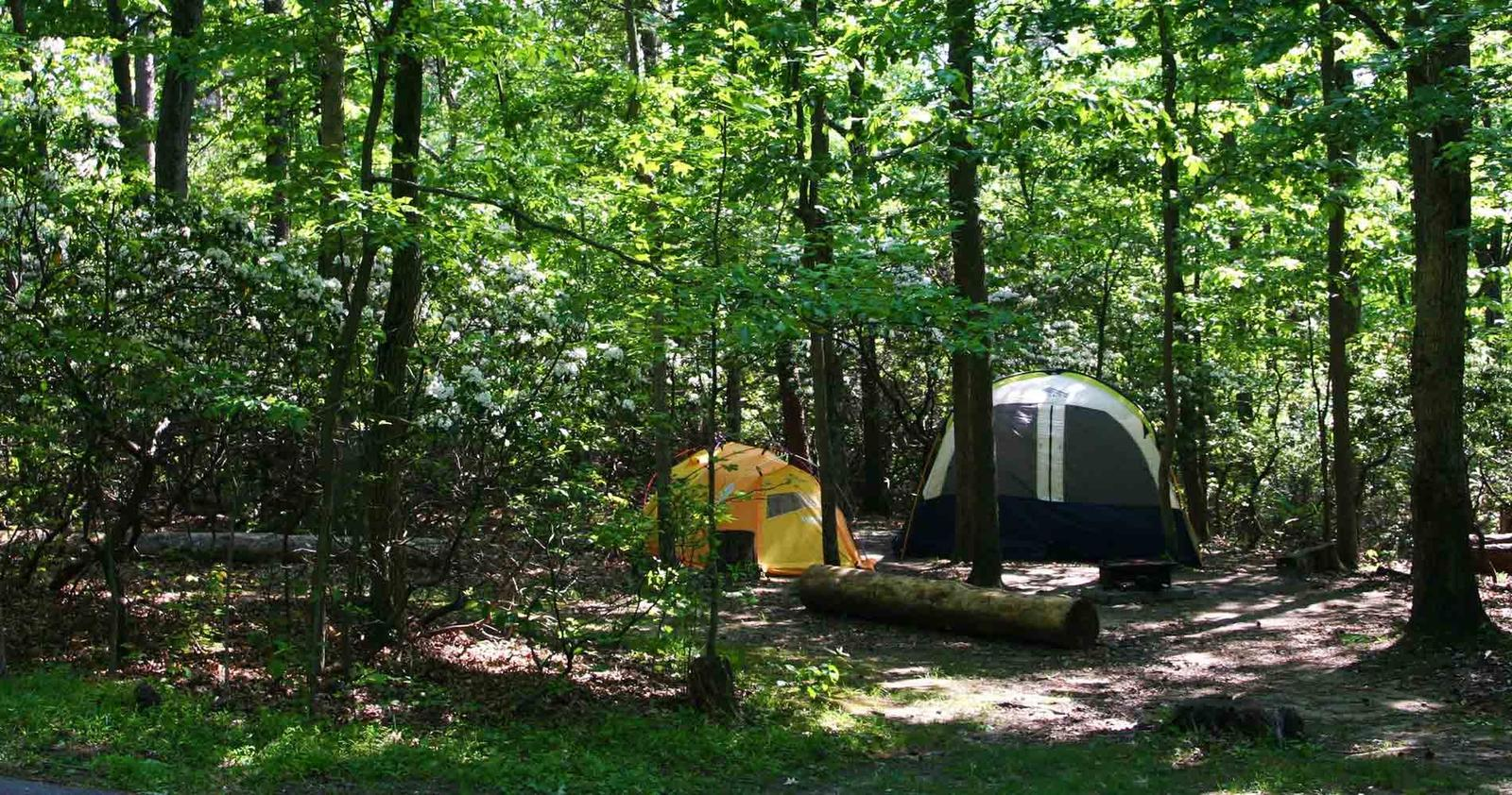 A tent in the B loop RV of the Greenbelt Park, Maryland campgroundEnjoy a beautiful campsite in the Urban Oasis just 12 miles from the Nation's Capital