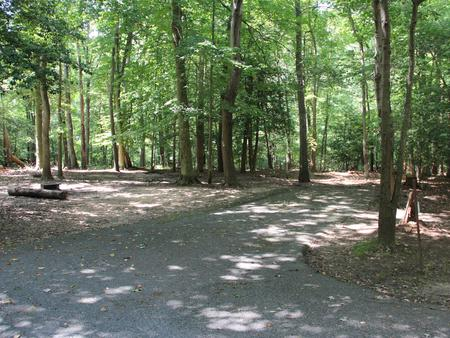 Greenbelt Park campground Site 23