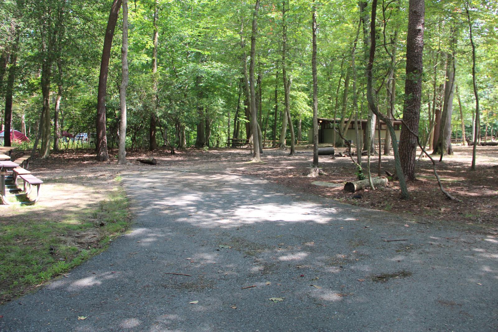 Greenbelt Park campground Site 24