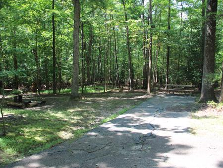 Greenbelt Park campground Site 31