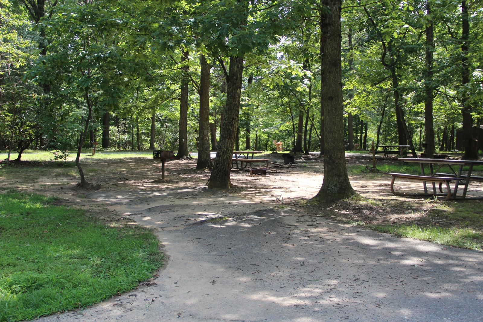 Greenbelt Park campground Site 39