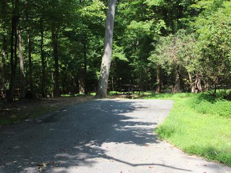 Greenbelt Park campground Site 40