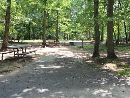 Greenbelt Park campground Site 41