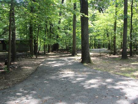 Greenbelt Park campground Site 46