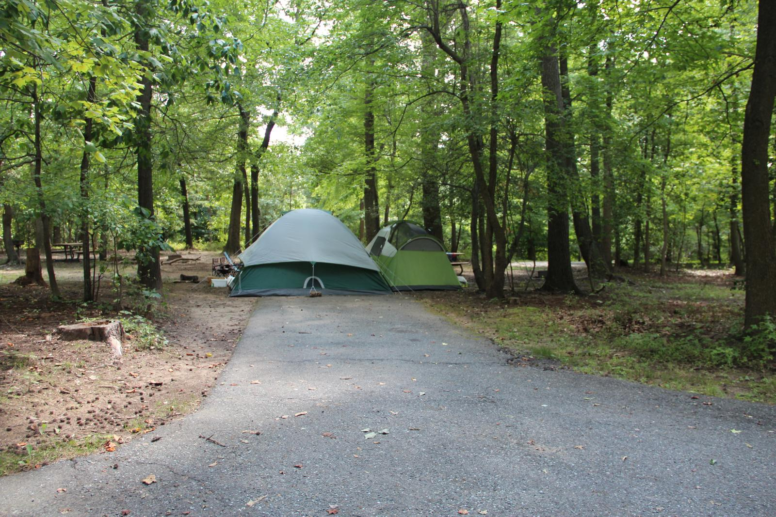 Greenbelt Park Campground Site 49