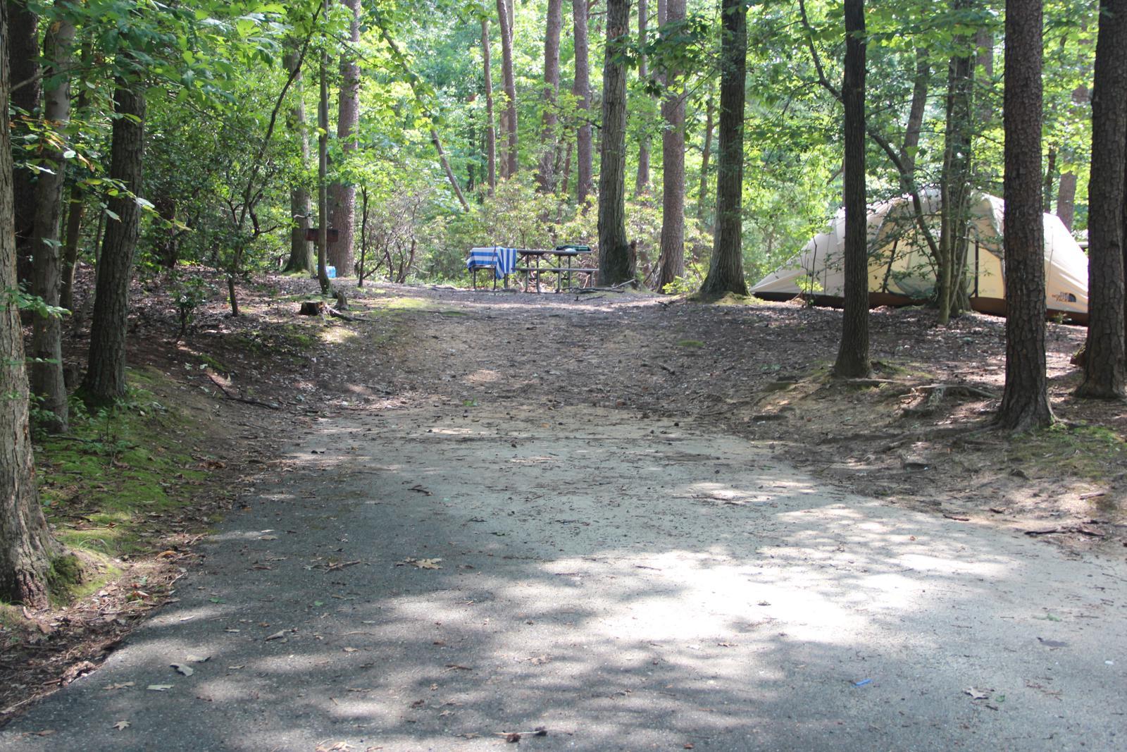 Greenbelt Park Campground Site 83