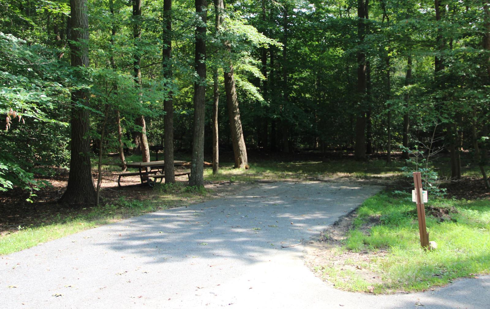 Greenbelt Park Campground Site 77
