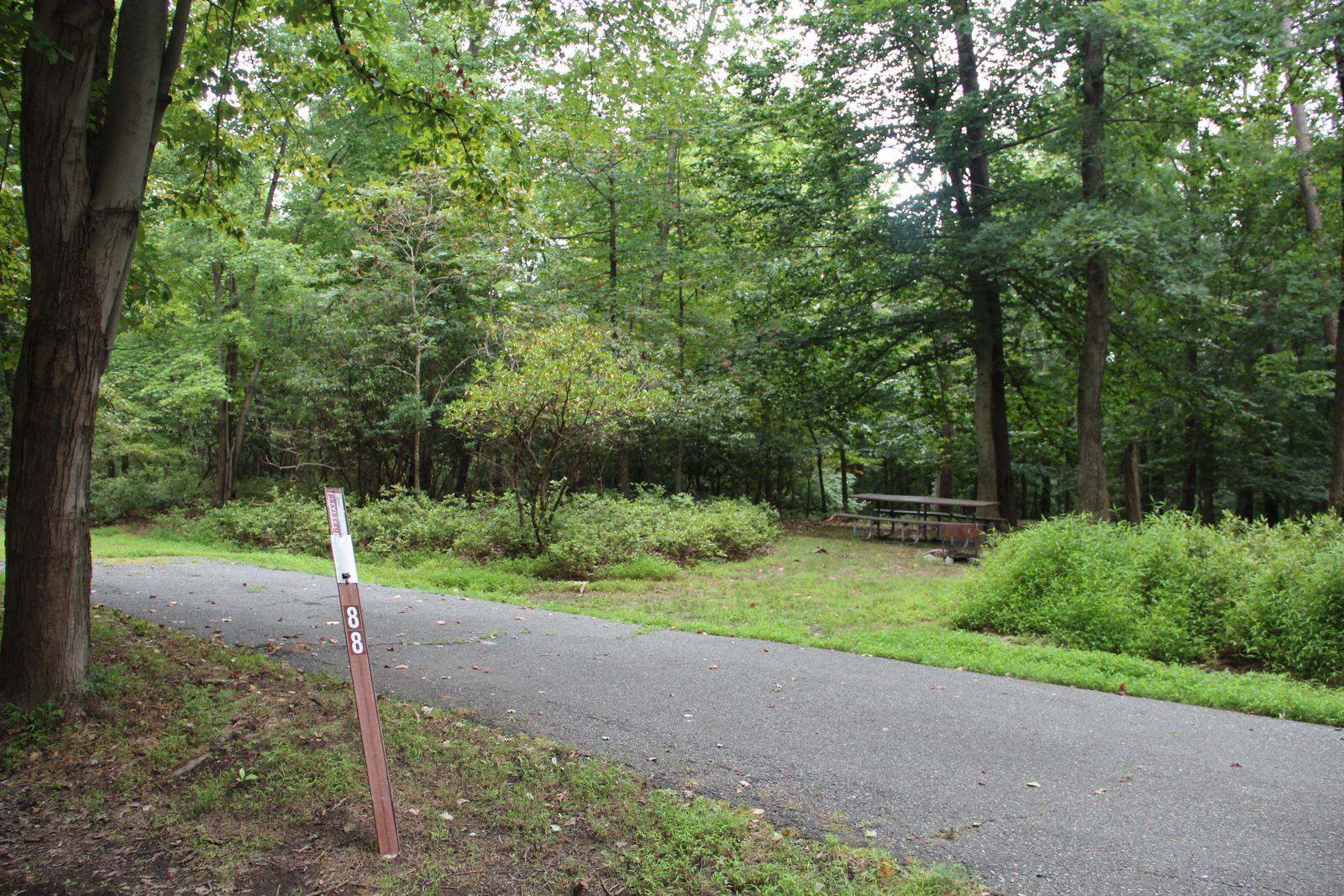 Greenbelt Park Campground Site 88