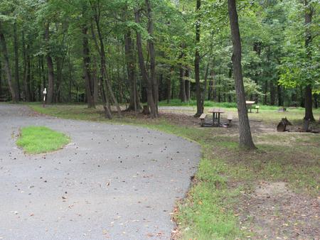Greenbelt Park Campground Site 98