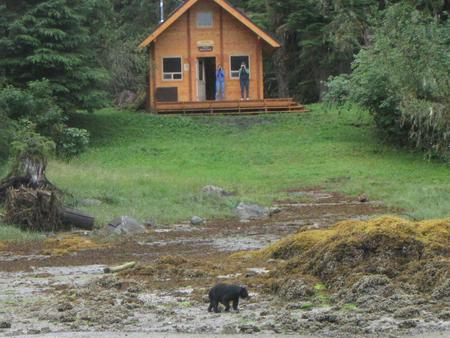 Anan Bay Cabin with bear on the beach.