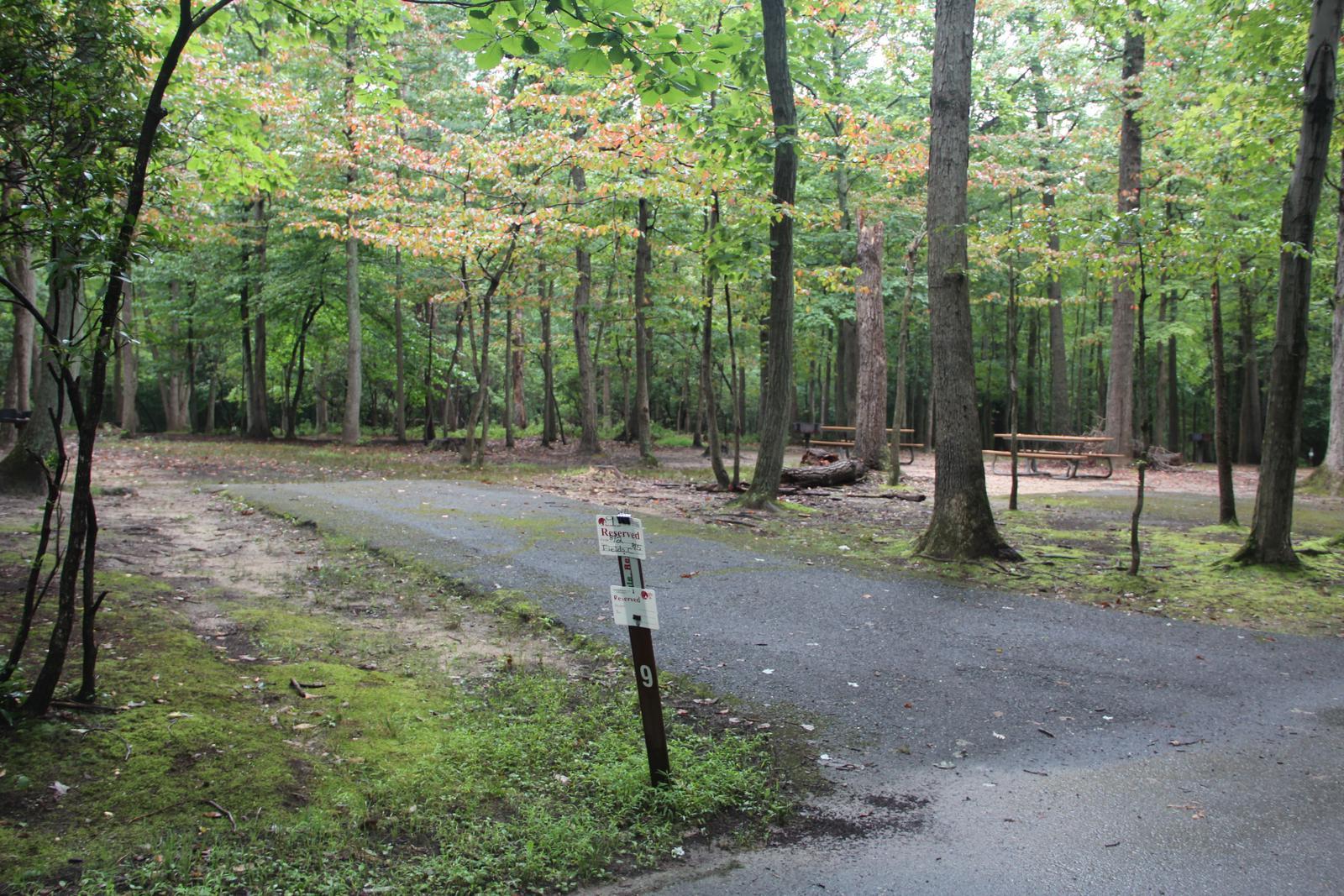Greenbelt Park Campground Site 009
