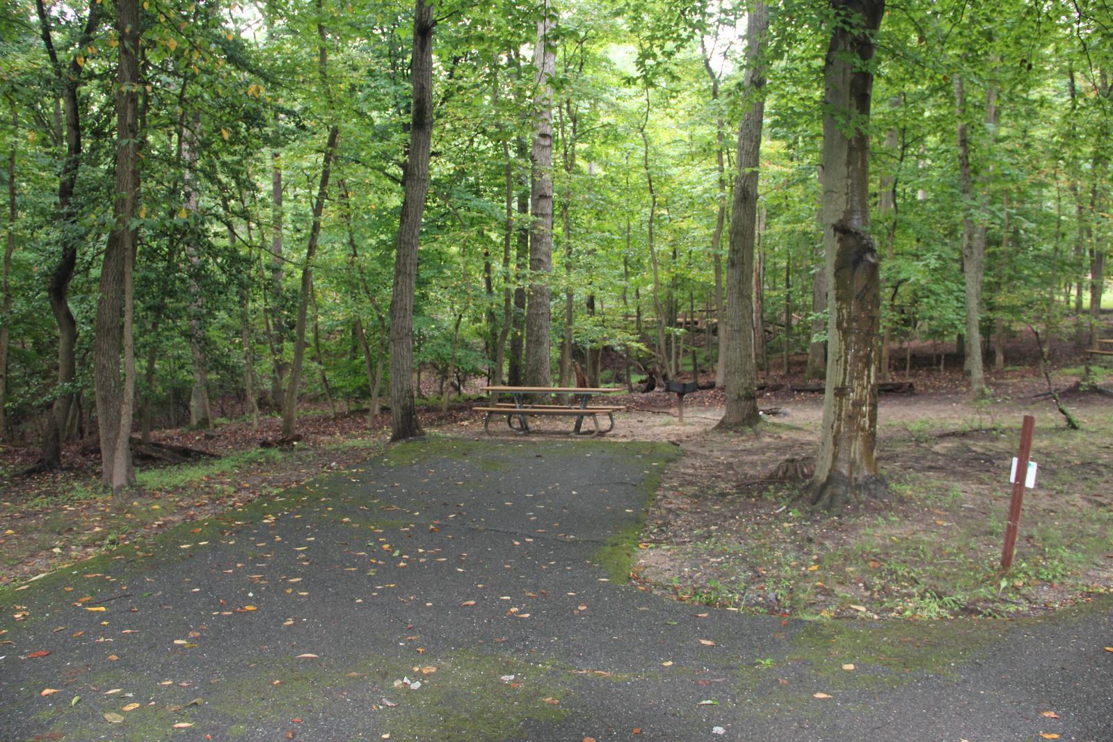 Greenbelt Park Campground Site 010