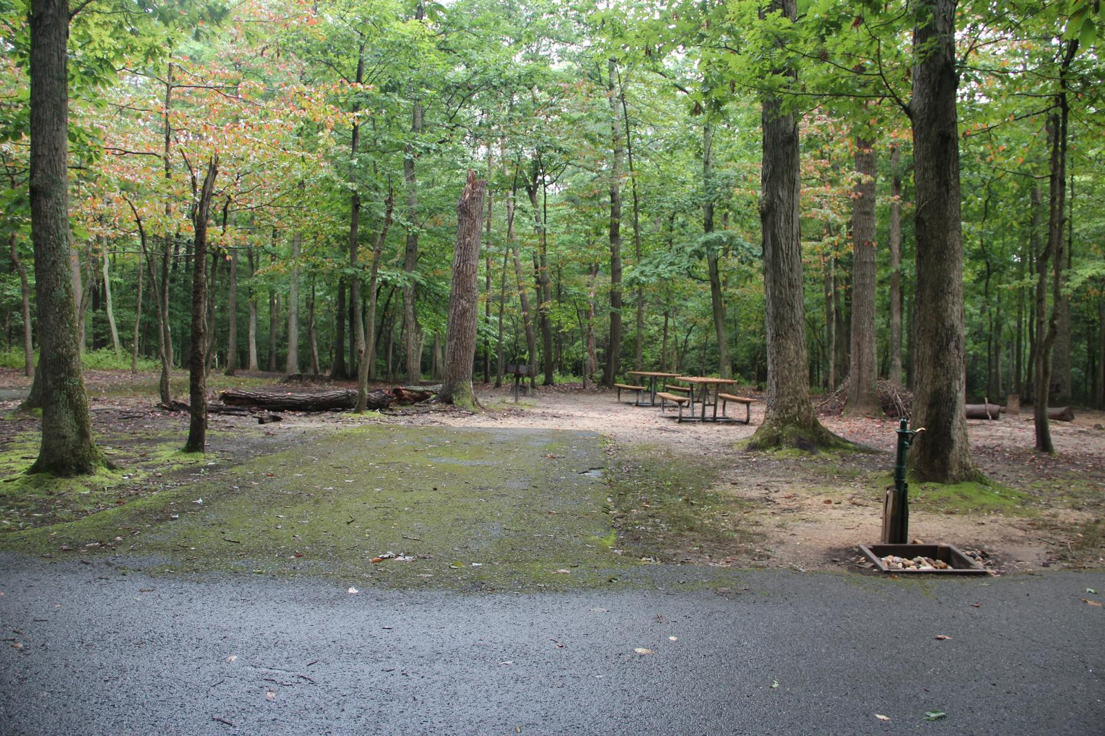 Greenbelt Park Campground Site 011