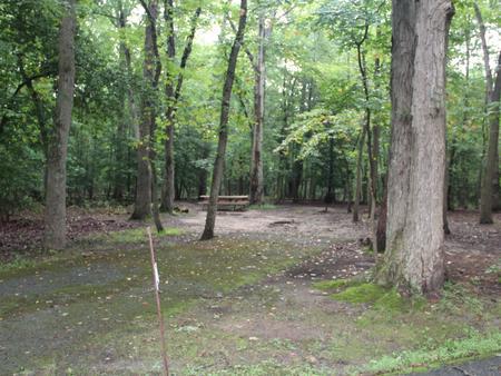 Greenbelt Park Campground Site 015