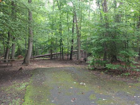 Greenbelt Park, Maryland Campground  Site 20