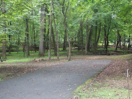 Greenbelt Park Campground Site 115