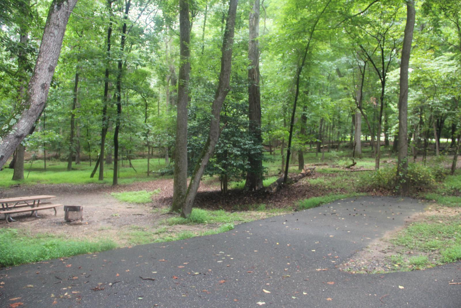 Greenbelt Park Campground Site 117