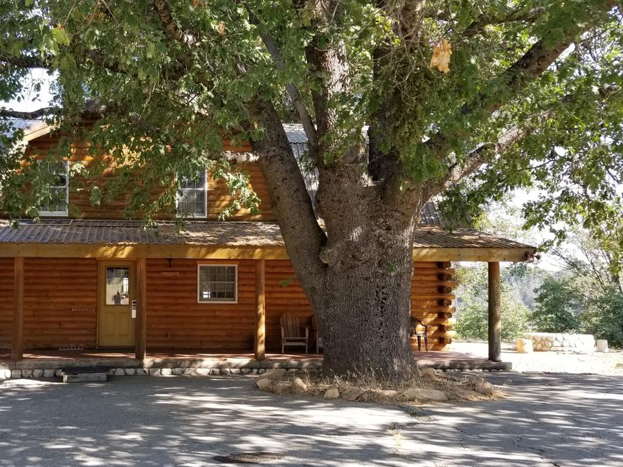 view of the exterior of the Lakeside Cabin with large oak tree