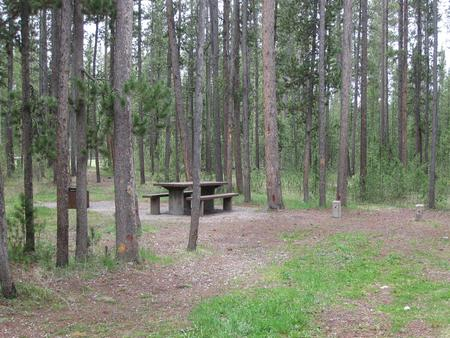 Site A10, surrounded by pine trees, picnic table & fire ringSite A10