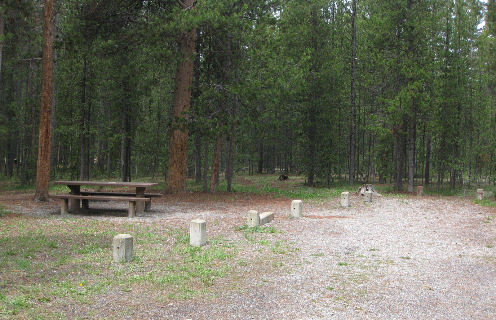 Site A1, surrounded by pine trees, picnic table & fire ringCampsite A1