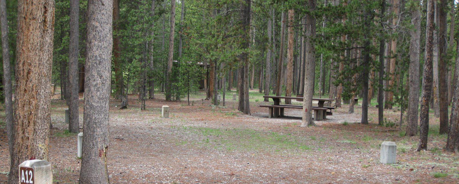 Site A11, surrounded by pine trees, picnic table & fire ringSite A11