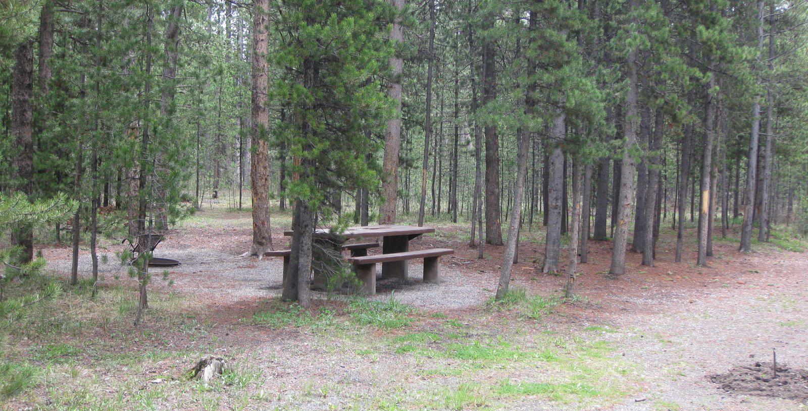 Site A13, surrounded by pine trees, picnic table & fire ringSite A13