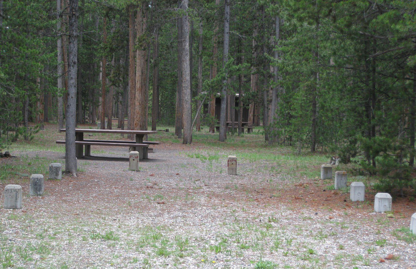 Site A14, surrounded by pine trees, picnic table & fire ringSite A14