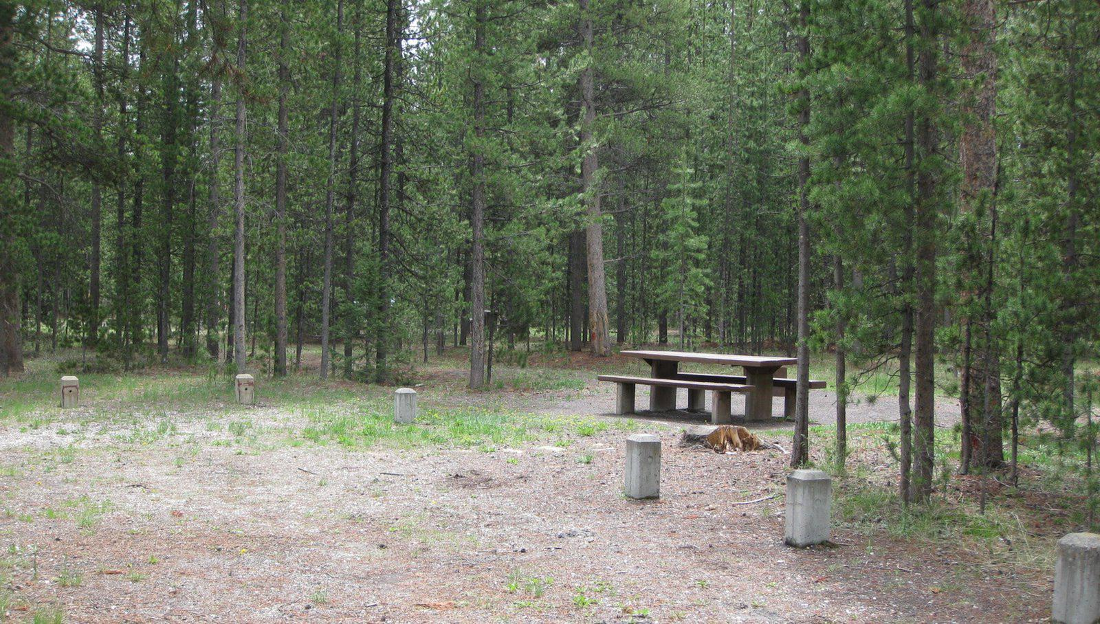 Site A18, surrounded by pine trees, picnic table & fire ringSite A18