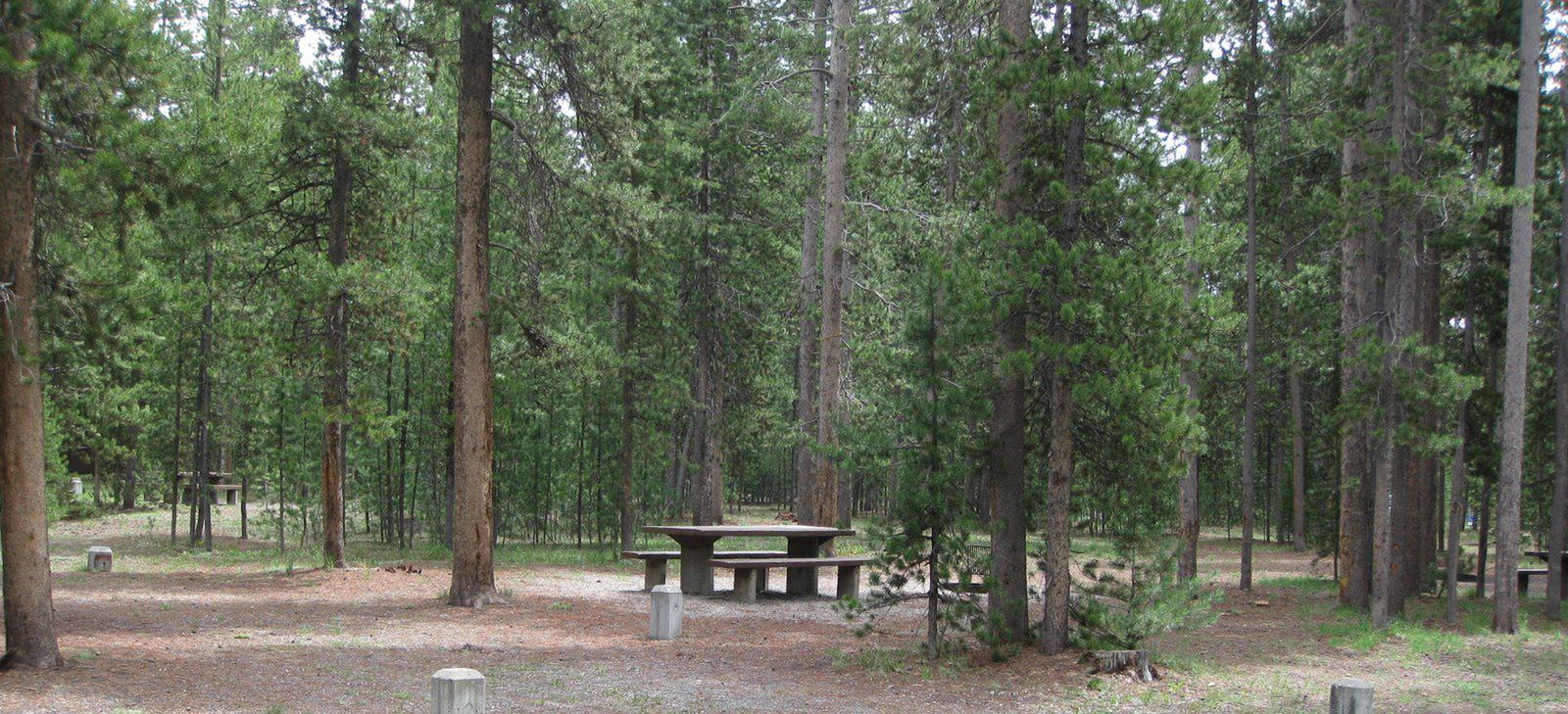 Site A2, surrounded by pine trees, picnic table & fire ringSite A2