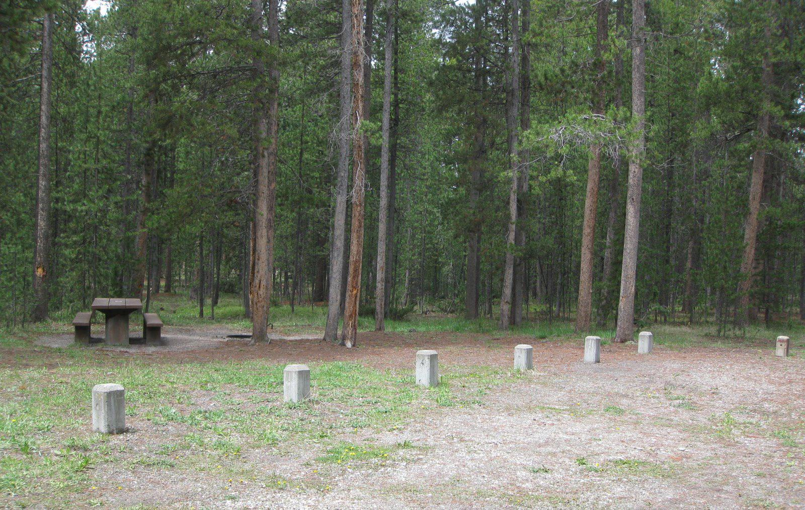 Site A3, surrounded by pine trees, picnic table & fire ringSite A3