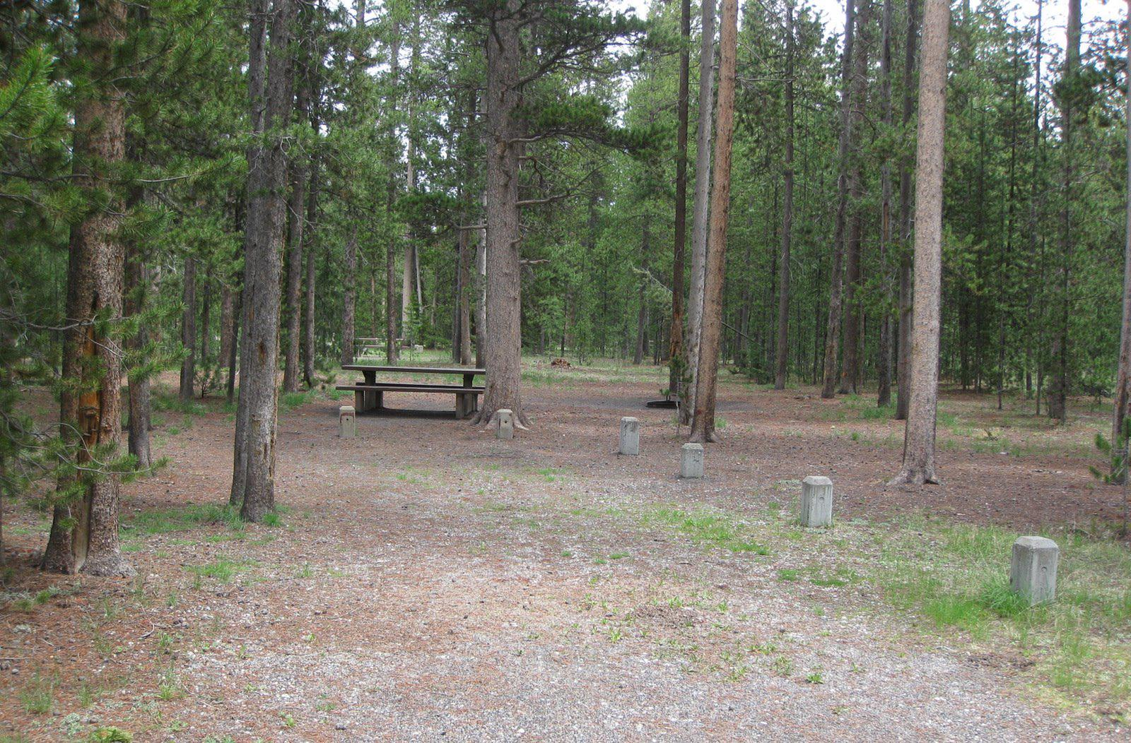 Site A4, surrounded by pine trees, picnic table & fire ringSite A4