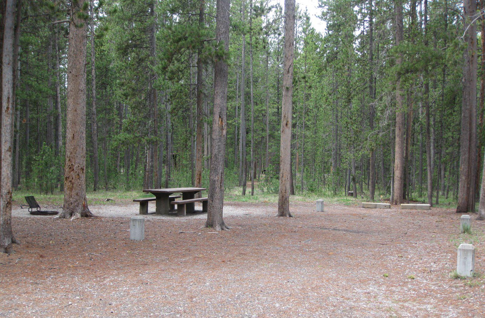 Site A5, surrounded by pine trees, picnic table & fire ringSite A5