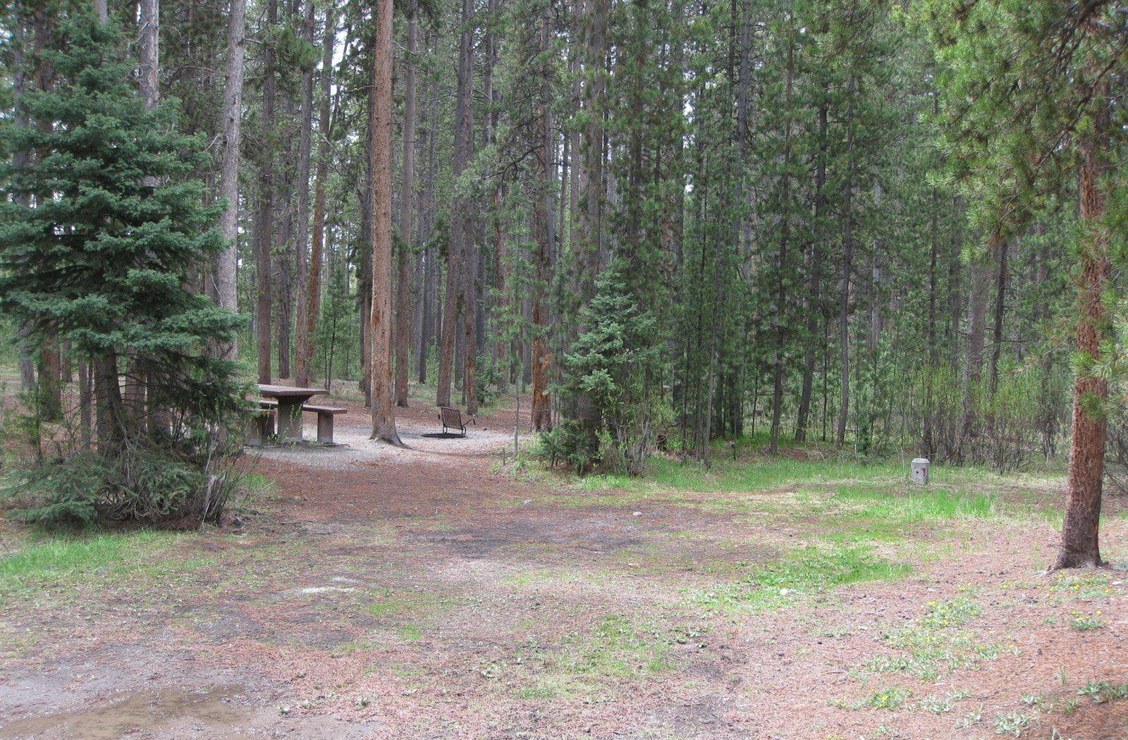 Site A6, surrounded by pine trees, picnic table & fire ringSite A6