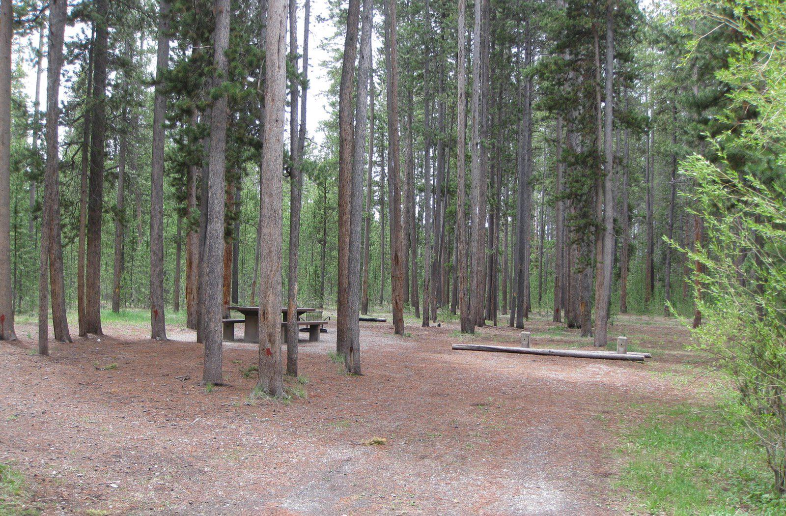 Site A7, surrounded by pine trees, picnic table & fire ringSite A7