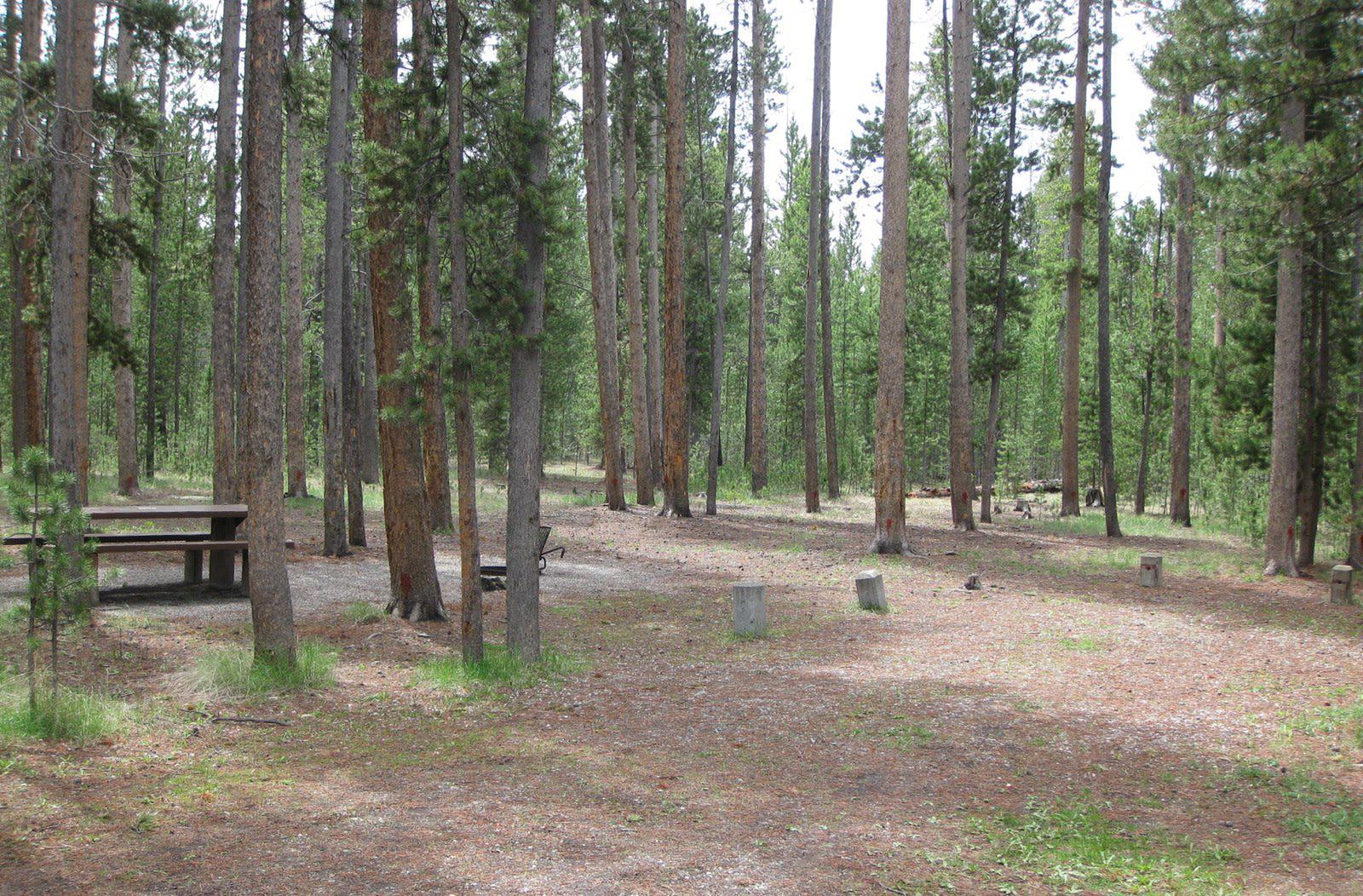Site A9, surrounded by pine trees, picnic table & fire ringSite A9