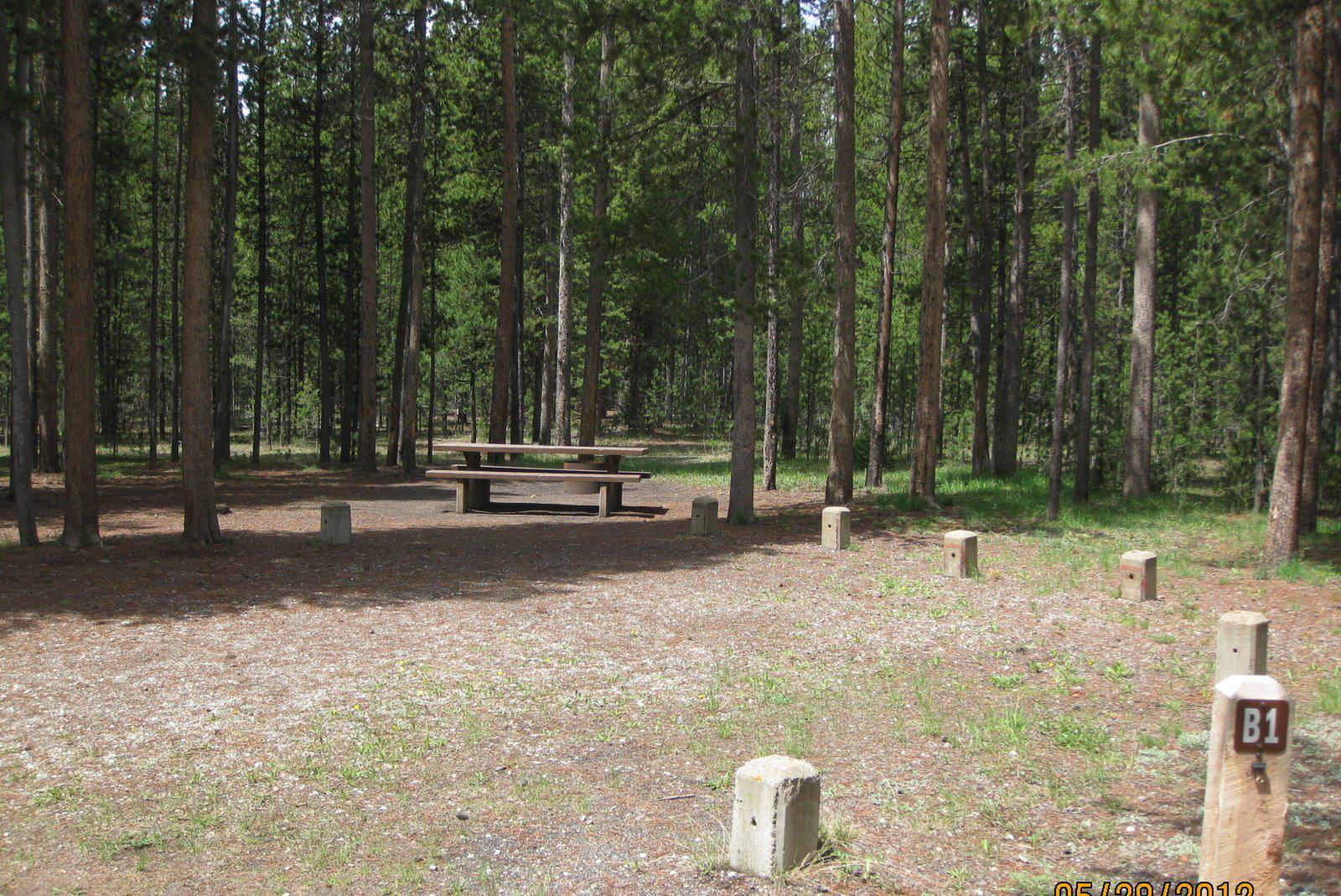 Site B1, surrounded by pine trees, picnic table & fire ringSite B1