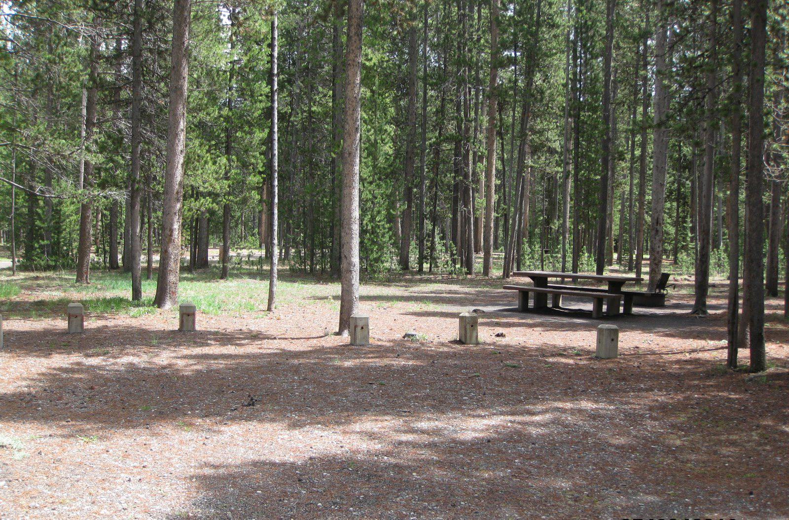 Site B10, surrounded by pine trees, picnic table & fire ringSite B10