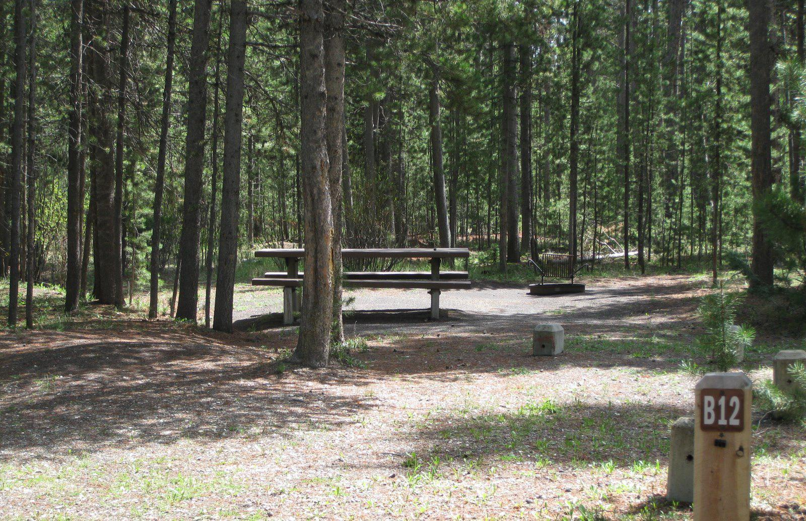 Site B12, surrounded by pine trees, picnic table & fire ringSite B12