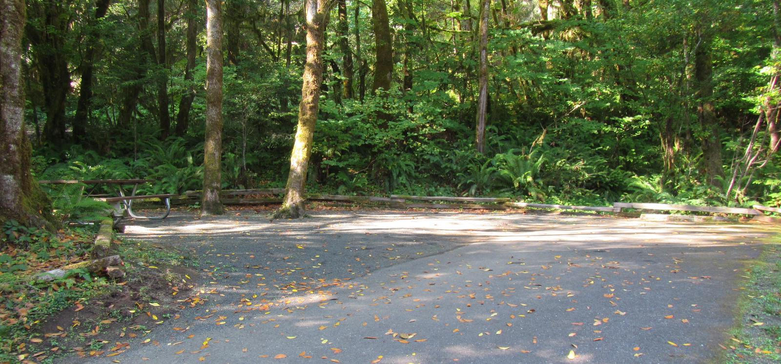 46' parking spur, 2 small trees in the center of camping area