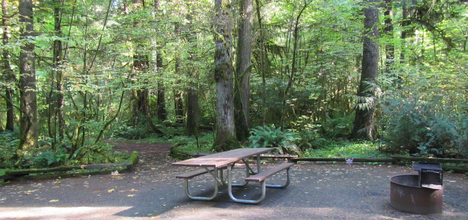 Camp area with picnic table, fire ring, access to river trail