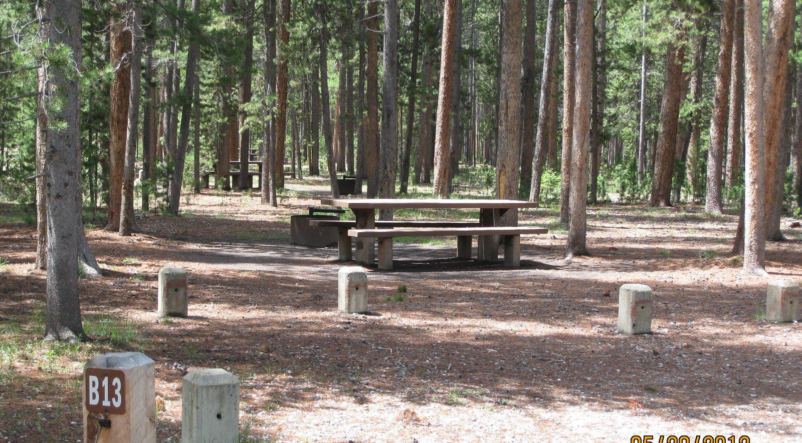 Site B13, surrounded by pine trees, picnic table & fire ringSite B13