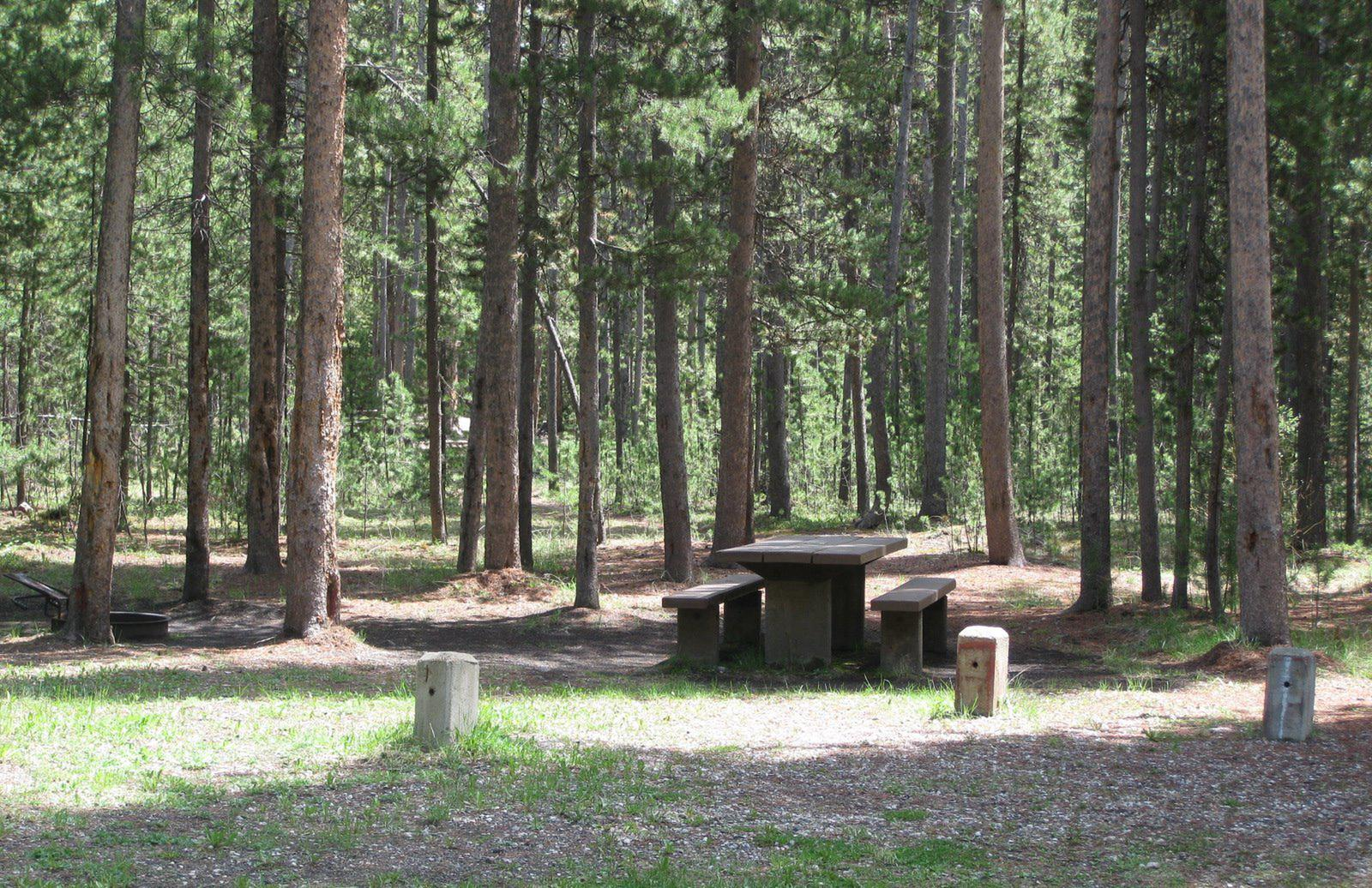 Site B14, surrounded by pine trees, picnic table & fire ringSite B14