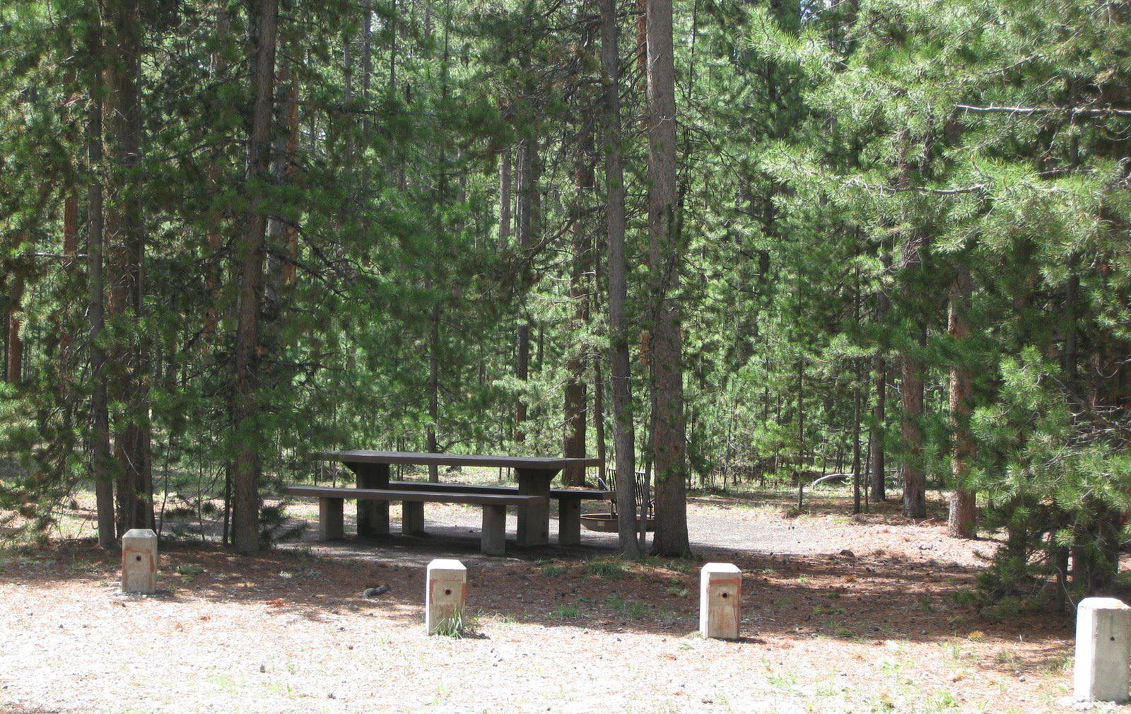 Site B15, surrounded by pine trees, picnic table & fire ringSite B15