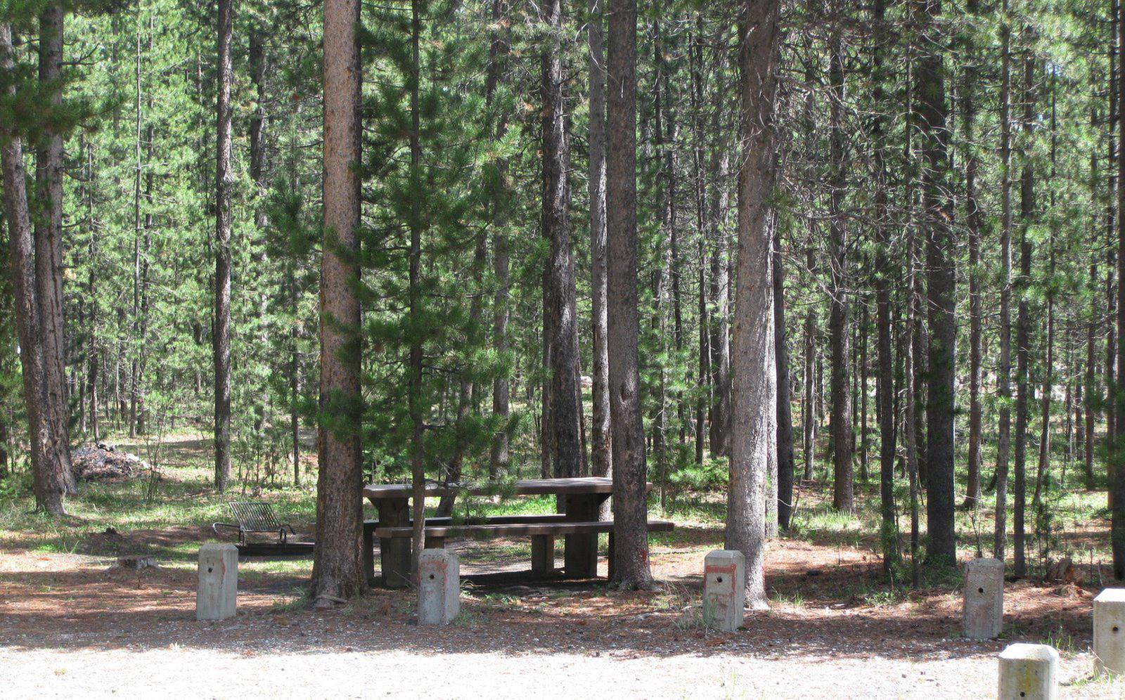 Site B17, surrounded by pine trees, picnic table & fire ringSite B17