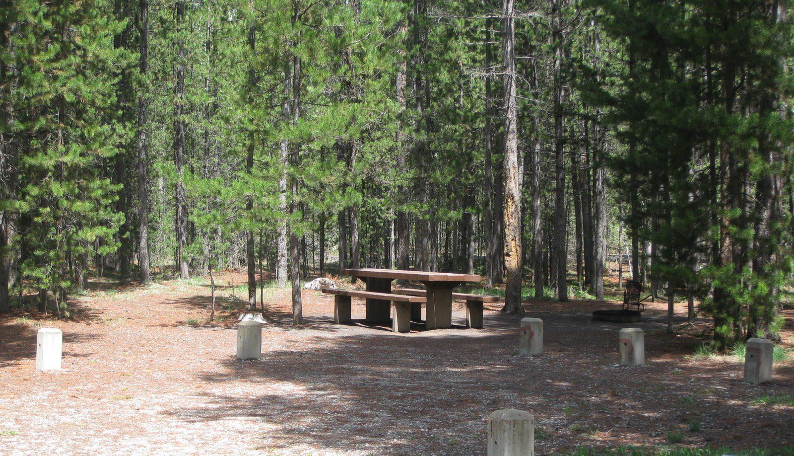 Site B18, surrounded by pine trees, picnic table & fire ringSite B18